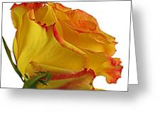 A Perfect Rose Greeting Card