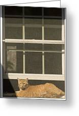 A Pet Cat Resting In A Screened Window Greeting Card