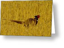 A Pheasant Looking For A Mate Greeting Card