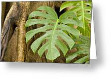 A Philodendron Grows On The Side Greeting Card