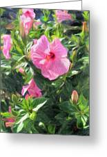 A Pink Hibiscus Greeting Card