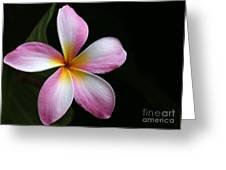 A Pink Plumeria Greeting Card