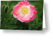 A Pink Poppy Portrait. Greeting Card