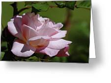 A Pink Rose  Greeting Card