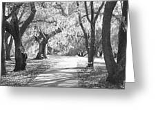 A Place For Contemplation Ir Greeting Card
