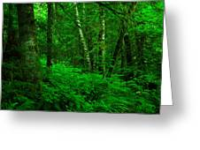 A Place In The Forest Greeting Card