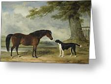 A Pony With A Dog Greeting Card