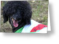 A Poodle Doo Greeting Card