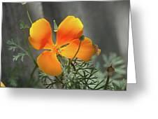 A Poppy Unfurled  Greeting Card
