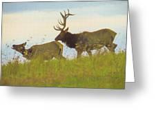 A Portrait Of A Large Bull Elk Following A Cow,rutting Season. Greeting Card