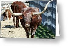 A Portrait Of A Texas Longhorn Steer Greeting Card
