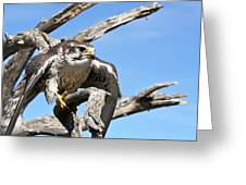A Prairie Falcon Against A Blue Sky Greeting Card