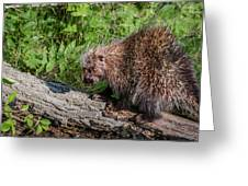 A Prickly Situation Greeting Card