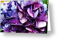 A Puff Of Purple Greeting Card