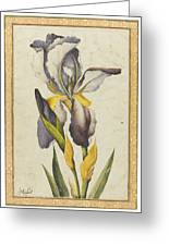 A Purple Iris Greeting Card