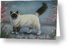 A Himalayan Cat Greeting Card