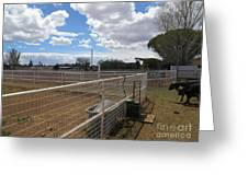A Ranch Scene Greeting Card