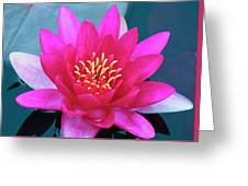 A Red And Yellow Water Lily Flower Greeting Card