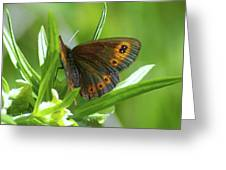 A Red Butterfly Perching  Greeting Card