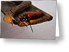 A Red Glowing Beetle Greeting Card