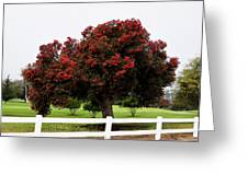 A Red Pin Under A Red Tree At Morro Bay Golf Course Greeting Card