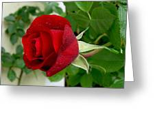 A Red Rose In The Dew Of Pearls Hours Greeting Card