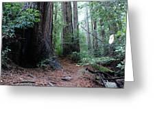 A Redwood Trail Greeting Card