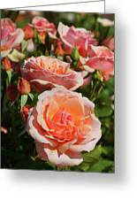A Regiment Of Roses Greeting Card