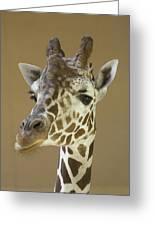 A Reticulated Giraffe Makes A Slanted Greeting Card