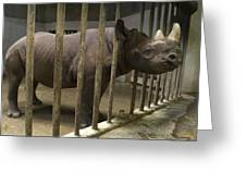 A Rhino At The Sedgwick County Zoo Greeting Card