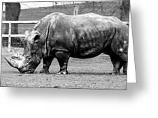 A Rhinoceros Greeting Card