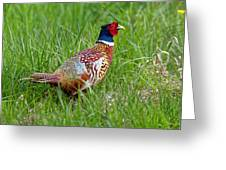 A Ring-necked Pheasant Walking In Tall Grass Greeting Card