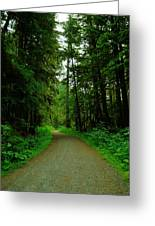 A Road Through The Forest Greeting Card