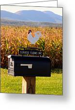 A Rooster Above A Mailbox 1 Greeting Card