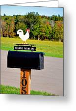 A Rooster Above A Mailbox 3 Greeting Card