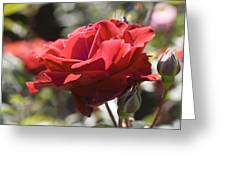 A Rose By Any Other Name-- Greeting Card