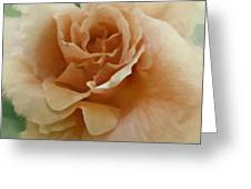 A Rose For Lady Mary Greeting Card