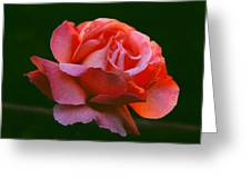 A Rose For Rose Greeting Card