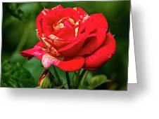 A Rose In Los Gatos Greeting Card