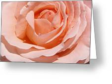 A Rose Is A Rose By Any  Name .... Greeting Card