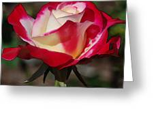 A Rose Is A Rose II Greeting Card