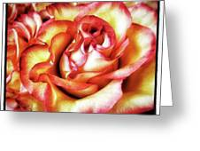 A Rose Is A Rose Is A Rose. A Gertrude Greeting Card by Mr Photojimsf