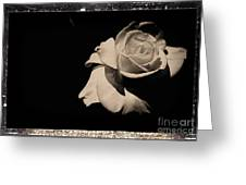 A Rose Is But A Rose  Greeting Card