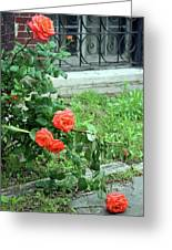 A Rose Is Down Greeting Card