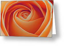 A Rose Like None Other Greeting Card