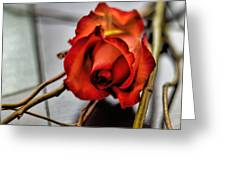 A Rose On Bamboo Greeting Card