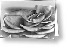 A Roses Solitude Greeting Card