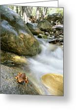 A Rough-skinned Newt Sits On A Rock Greeting Card by Rich Reid