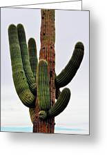 A Saguaro Afternoon Greeting Card