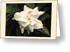 A Scent Of Gardenia Greeting Card